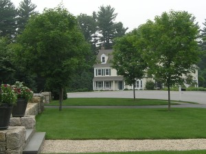 The maple on the left was planted at the proper depth; the two maples on the right were buried
