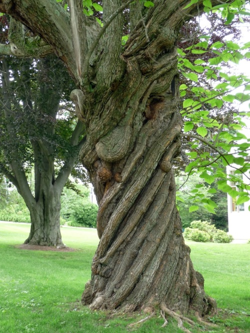 What a tree reaching behind itself looks like