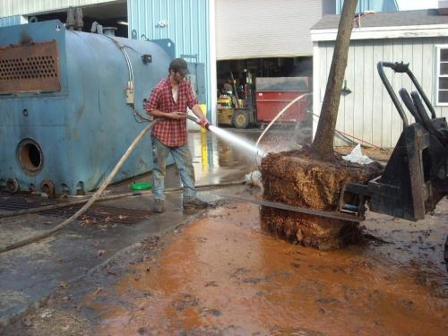 Root ball is held with a fork lift while Jake aims the fire hose at its clay root ball.