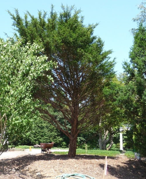 The following week: Taxus in a new spot, looking relaxed and healthy.