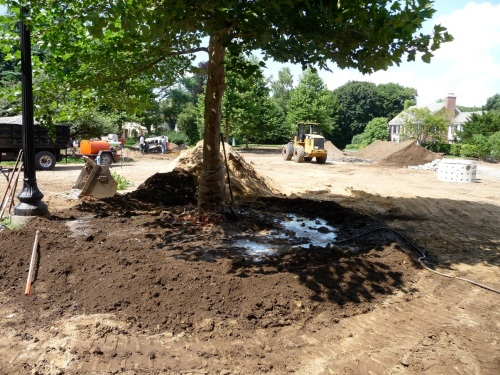 The tree, post-planting.  The arborists assessed how deep the root mass was and how it was formed, and dug the planting hole to accommodate, roughly, its form.  Once the tree is placed in the hole, the roots are spread out radially by hand, and loam shovelled in around, under, and over them.  Watering starts during the digging process, once the tree has been levelled, so that a loam slurry anchors the root plate and tree to its new site.  A well is formed to retain moisture and more water is added.