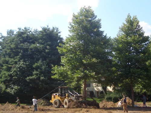 This project took place in late July, during a week of 85-degree heat.  Leaf turgor pressure was maintained throughout by the trees themselves (aided with some in-process watering).
