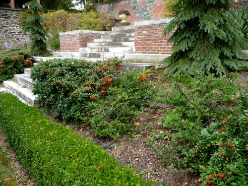On the other side of the Arborvitae Walk, the slope up to the drive and Chinese Garden is planted with Pyracantha and made passable with this stairway of solid stone steps.