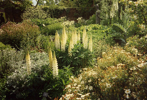 Sissinghurst White Gdn